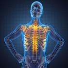 skelet van mens